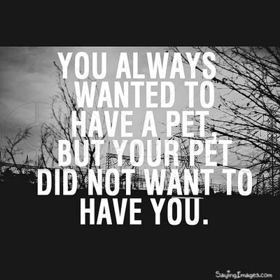 Your pet did not want to have you