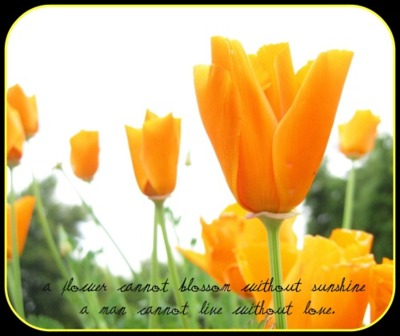 A Flower Cannot blossom without Sunshine ~ Flowers Quote
