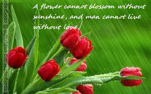 A flowers have no any blossom without sunshine, Man can not live without female love ~ Flowers Quote