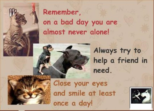 Quotes For A Friend Who Needs Help : Always try to help a friend in need advice quotes pictures