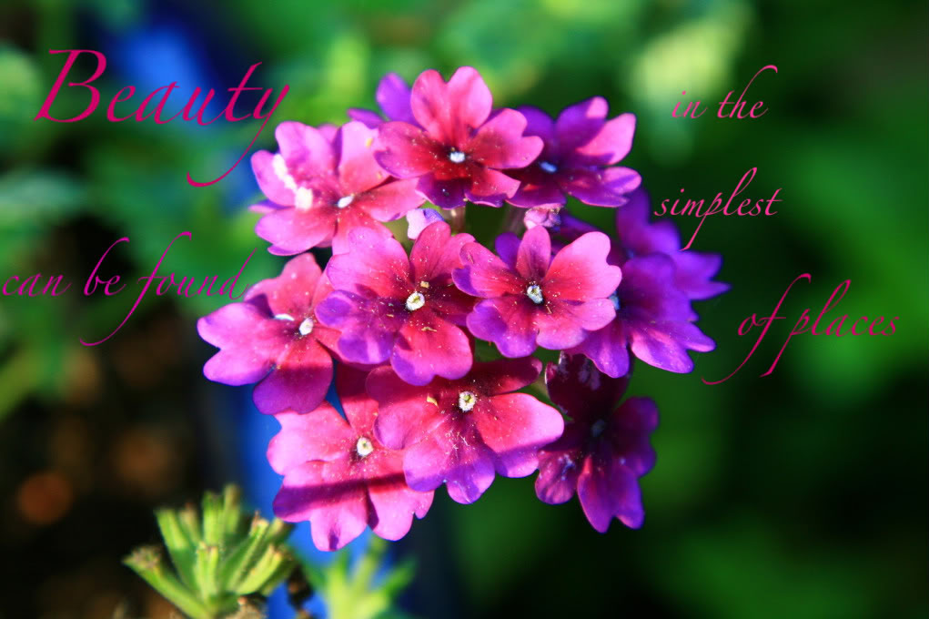 Beauty Can Be Found In The Simplest of Places ~ Beauty Quote