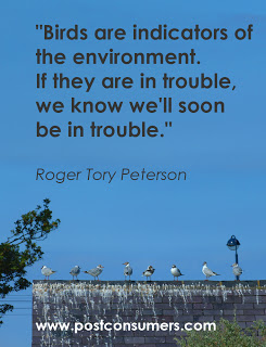 Birds are indicators of the environment.If they are in trouble,we know we'll soon be in trouble ~ Environment Quote