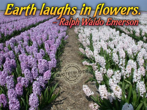 Earth laughs in flowers ~ Environment Quote
