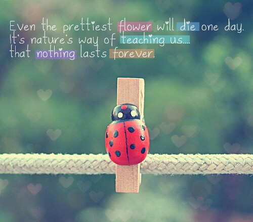 Even the Prettiest Flower will Die One Day ~ Flowers Quote
