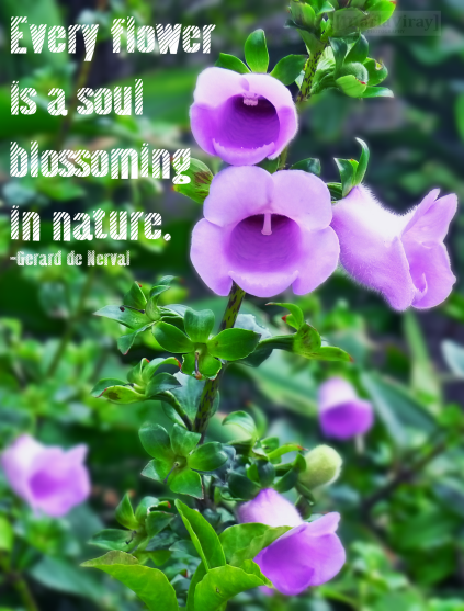 Flowers And Nature Quotes Quotesgram. Country Quotes For Instagram Bios. Sassy Quotes Big Lez Show. Inspirational Quotes Lyrics. Deep Emotional Quotes About Life. Famous Quotes Gandhi. Encouragement Movie Quotes. Funny Quotes For Friday. Inspirational Quotes You Can Do It