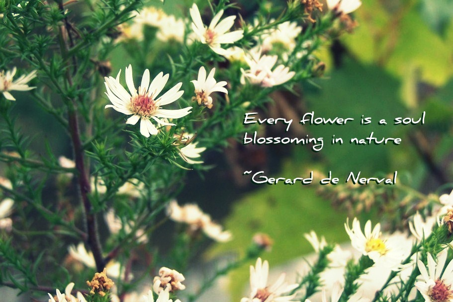 Each Flower Is A Soul Blossoming Out To Nature Honesty Quote