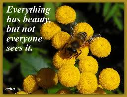 Flowers quotes pictures and flowers quotes images with message 13 everything has beauty but not everyone sees it flowers quote mightylinksfo