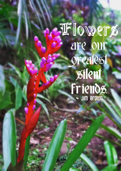 Flower are our Greatest Silent Friends ~ Flowers Quote