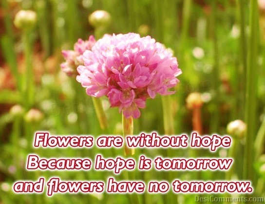 Flowers are without hope Because Hope is tomorrow and Flowers have no tomorrow ~ Flowers Quote