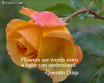 Flowers are Words Even a baby Can Understand ~ Flowers Quote