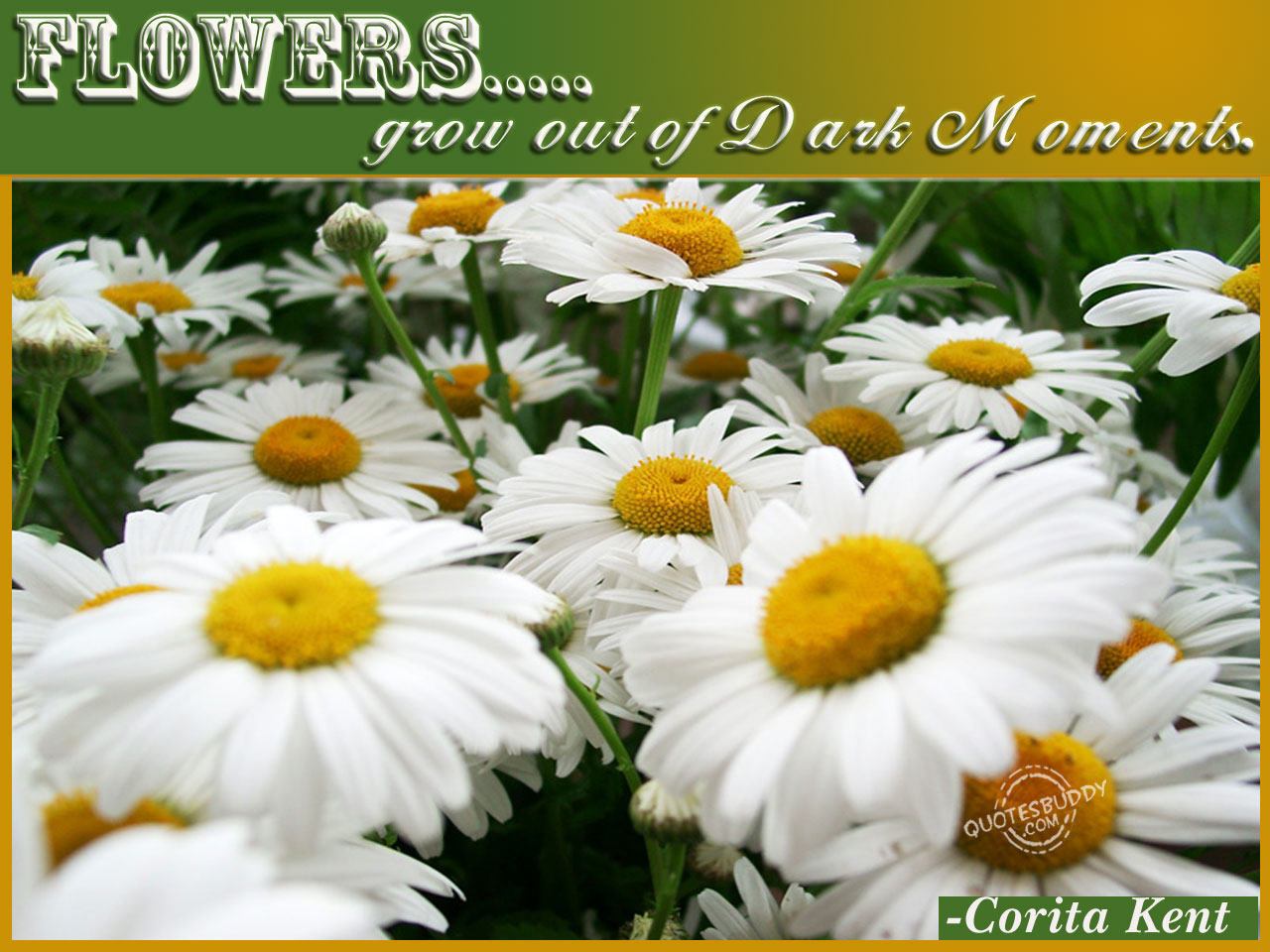 Flowers Grow out of Dark Moment ~ Flowers Quote