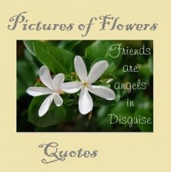 friends are angels in disguise flowers quote