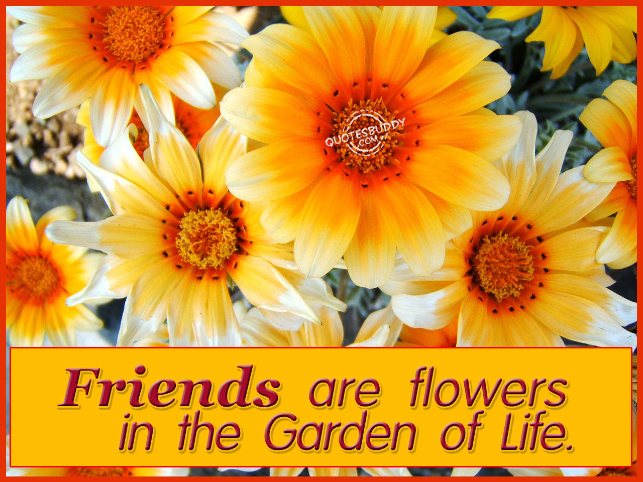 Friends Are Flowers In The Garden Of Life Flowers Quote