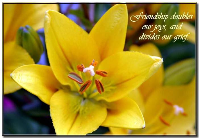 """friendship doubles our joys and divides our grief """" nature quote"""