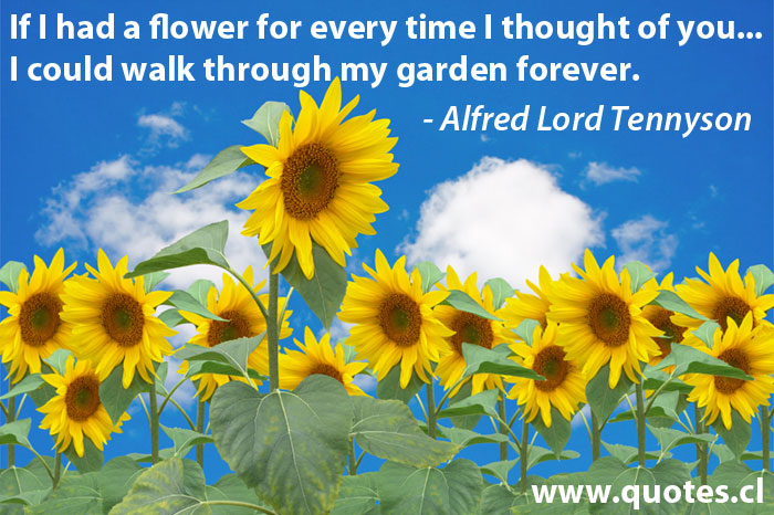 If I Had a Flower for Every time I Thought of you,I Could walk through my garden forever ~ Flowers Quote