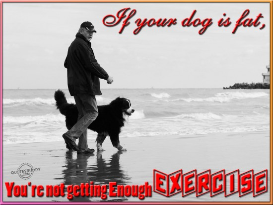 If your dog is fat, you're not getting enough exercise ~ Environment Quote