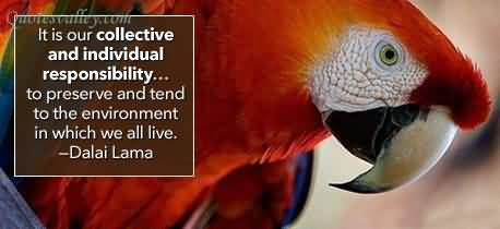 It Is Our Collective And Individual Responsibility ~ Environment Quote