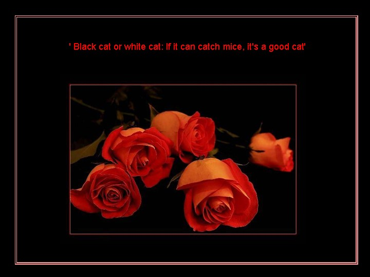 It's a Good Cat ~ Flowers Quote