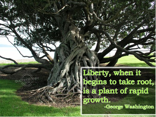 Liberty, when it begins to take root, is a plant of rapid growth ~ Freedom Quote