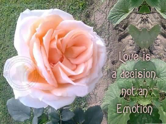 Love Is A Decision Not An Emotion ~ Emotion Quote