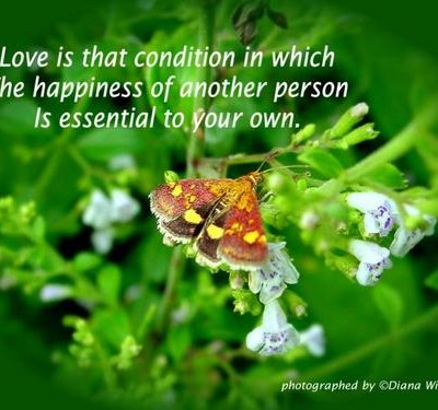 Love Is that Condition in which the hapiness of another person Is Essential to your own ~ Flowers Quote