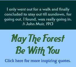 May The Forest Be With You ~ Earth Quote