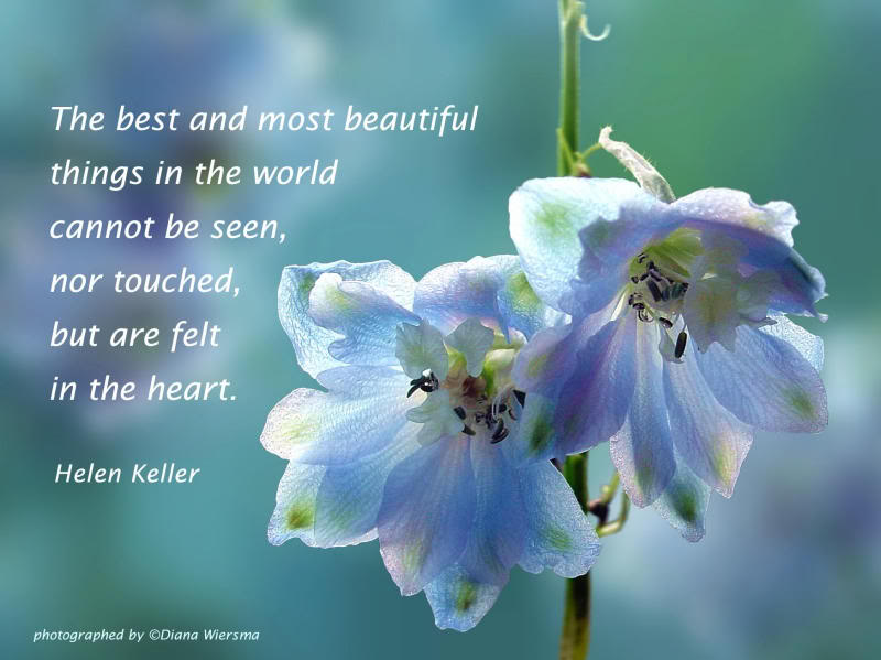 Flowers Quotes Pictures And Flowers Quotes Images With Message 5