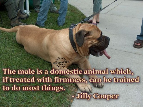 The male is a domestic animal which, if treated with firmness, can be trained to do most things