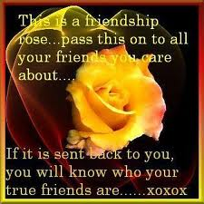 This is a Friendship rose ~ Flowers Quote