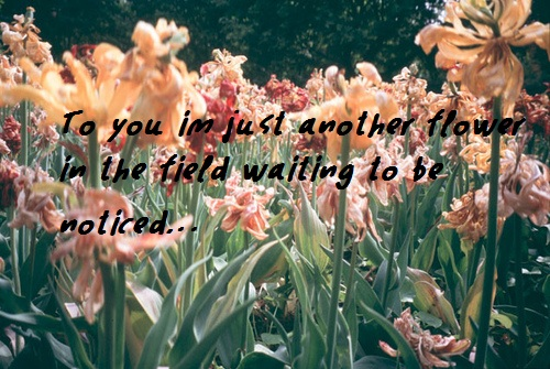 To You Im Just Another Flower In the tield Waiting to be noticed ~ Flowers Quote