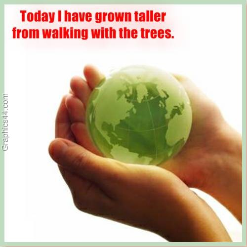Today I have grown taller from walking with the trees ~ Environment Quote