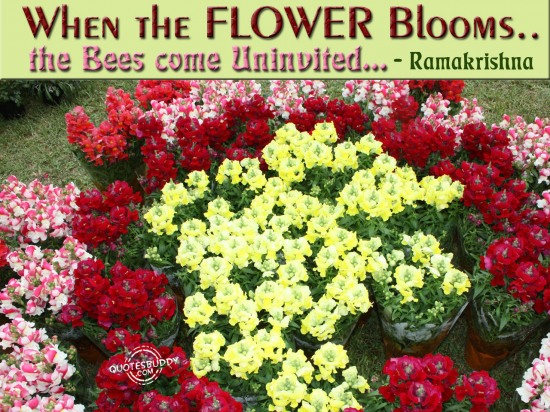 When the flower blooms, the bees come uninvited ~ Flowers Quote