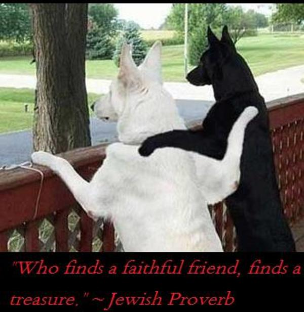Who Finds a Faithful Friend,Find a treasure ~ Best Friend Quote