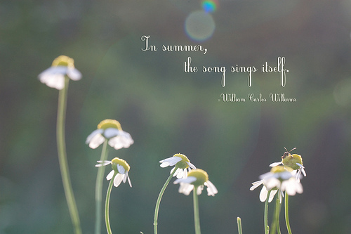 Summer Inspirational Quotes