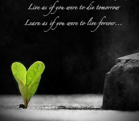 Learn as If You were to Live Forever ~ Inspirational Quote