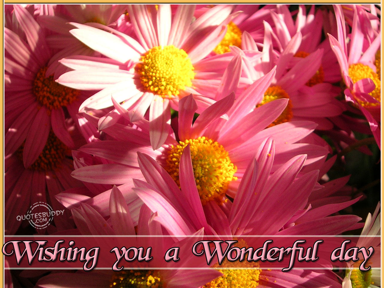 wishing-you-a-wonderful-day-good-day-quote.jpg