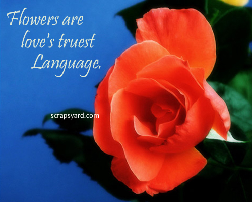love quotes and flowers