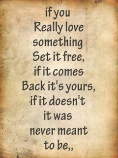Funny Quotes If You Love Something Set It Free : if-you-really-love-something-set-it-free-if-it-comes-back-its-yours-if ...