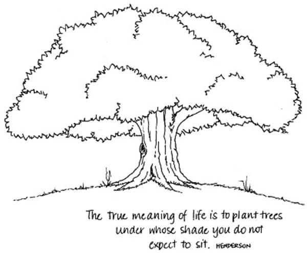 Without meaning the true meaning of sorry quotes saying What is the meaning of tree