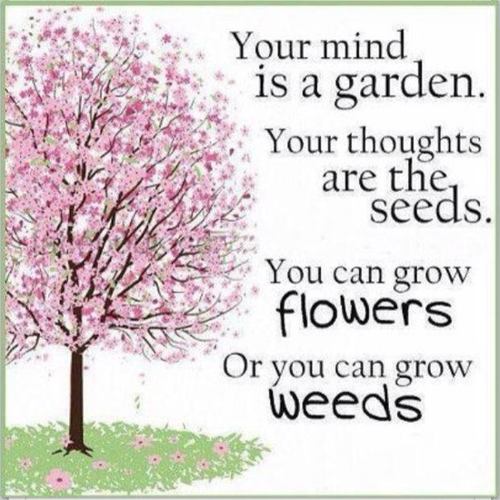Your Mind Is A GardenYour Thoughts Are The SeedsYou Can Grow Mesmerizing Garden Love Quotes