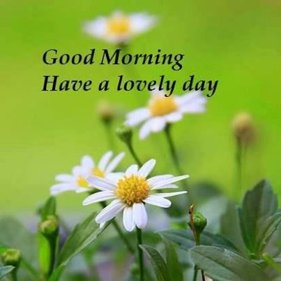 good morning have a lovely day nature quote quotespictures com