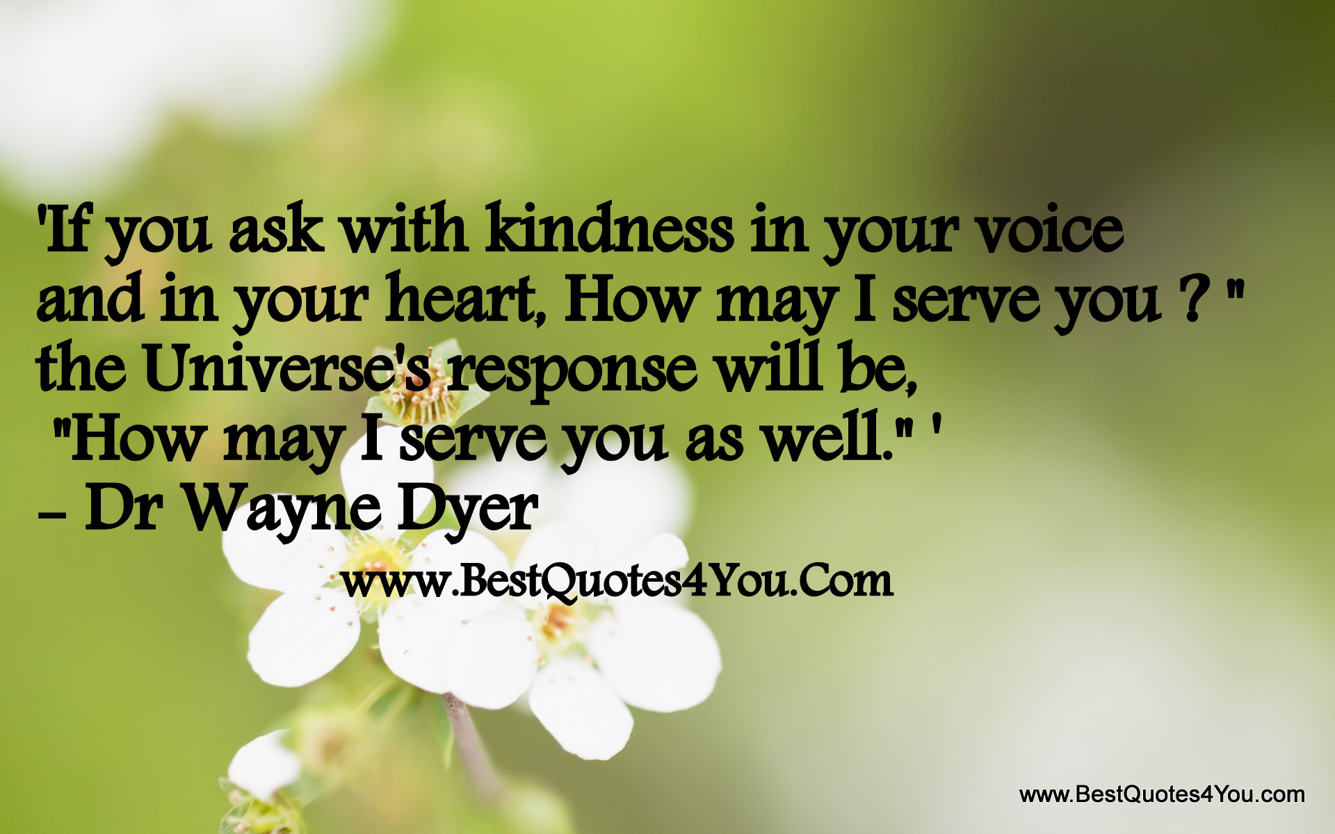 """ If You Ask With Kindess In Your Voice And In Your Heart, How May I Serve You, The Universe's Response Will Be, How May I Serve You As Well "" - Dr. Wayne Dyer   ~ Spring Quote"