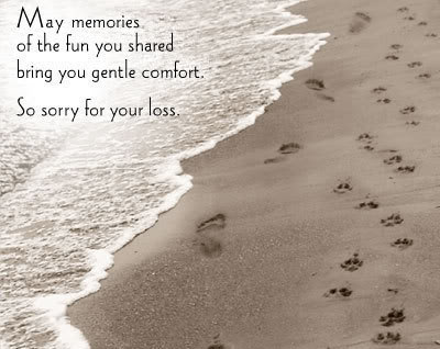 May Memories Of The Fun Your Shared Bring You Gentle Comfort ...