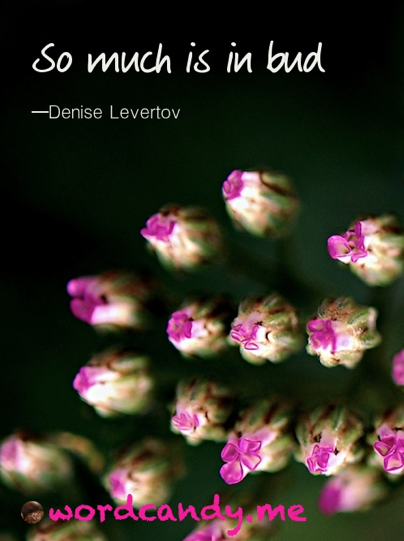 "so much is in bud "" denise levertov spring quote"