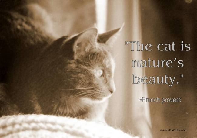 """ The Cat Is Nature's Beauty """