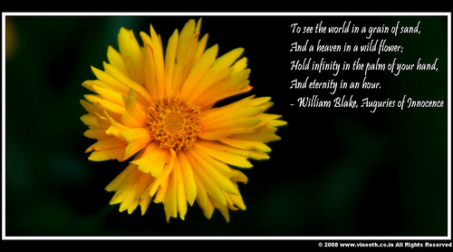 """ Too See The World In A Grain Of Sand, And A Heaven In A Wild Flower…..  ~ Nature Quote"