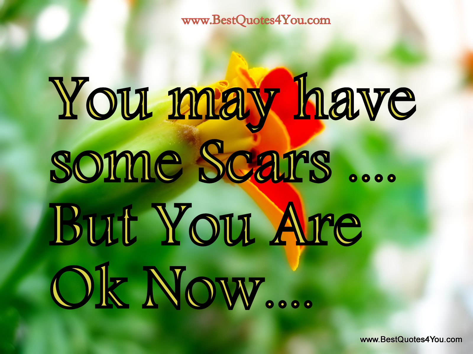 """ You May Have Some Scars But You Are Ok Now ""  ~ Spring Quote"