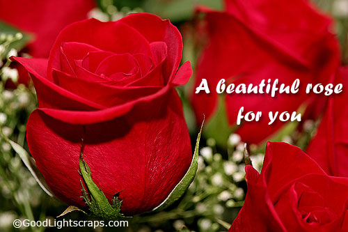 A Beautiful Rose For You