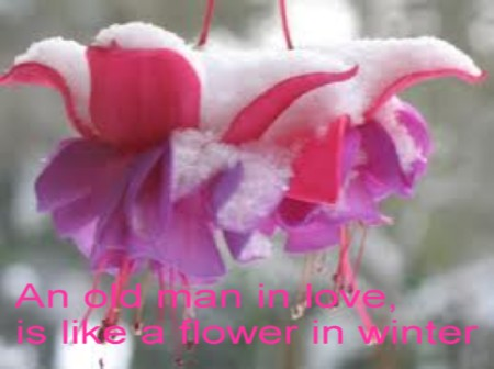 An Old Man In Love Is Like A Flower In Winter Beauty Quote