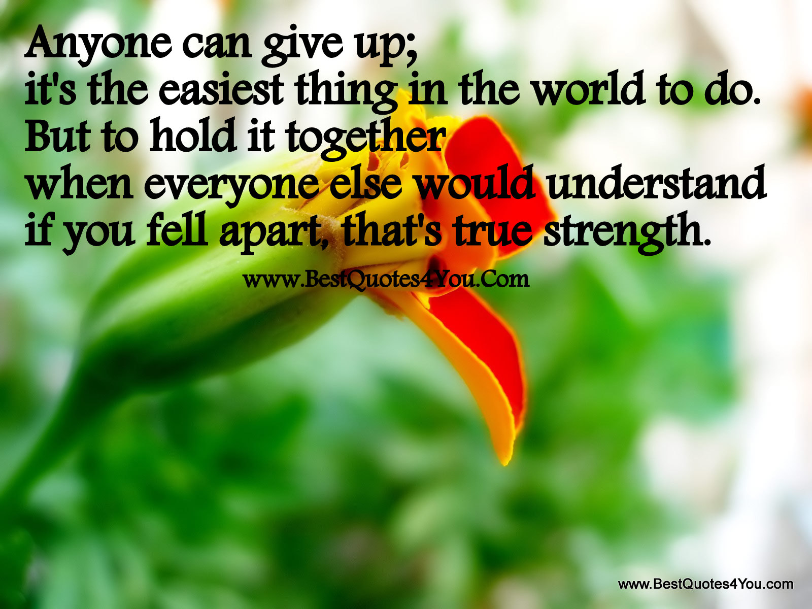 Anyone Can Give Up; It's The Easiest Thing In The World To Do. But To Hold It Together When Everyone Else Would Understand If You Fell Apart That's True Strength